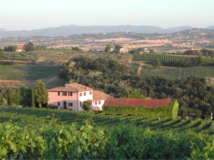 Italian Wines Built for Food. Weekend Tasting Event. image